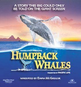 Humpback.Whales.2015.HDR.UHD.BluRay.2160p.TrueHD.Atmos.7.1.HEVC.REMUX-FraMeSToR ~ 15.2 GB
