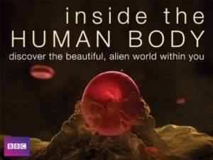 Inside.the.Human.Body.S01.720p.BluRay-DON ~ 7.8 GB