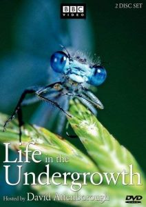 Life.in.the.Undergrowth.S01.720p.WebRip – 4.9 GB