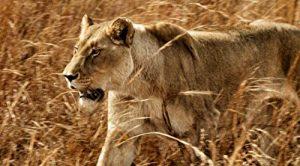 Ingenious.Animals.S01.720p.iP.WEBRip.AAC2.0.h264-BLUEPLANET ~ 8.0 GB