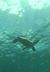 Hawaii.Underwater.Paradise.2008.1080i.BluRay.REMUX.VC-1.DD.5.1-EPSiLON ~ 13.3 GB