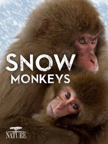 """Nature"" Snow Monkeys"