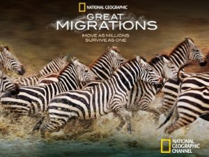 Great.Migrations.2010.S01.720p.BluRay.x264-DON – 19.3 GB