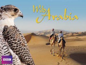 Wild.Arabia.S01.UNCUT.1080p.AMZN.WEB-DL.DD+2.0.x264-Cinefeel – 10.1 GB