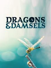 Dragons.and.Damsels.2019.2160p.WEB-DL.AAC2.0.H.264-BLUTONiUM – 5.1 GB