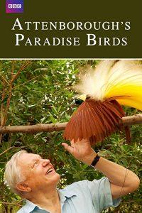 Attenborough's.Paradise.Birds.2015.1080p.AMZN.WEB-DL.DD+2.0.x264-Cinefeel – 4.6 GB