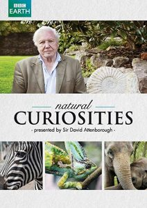 David.Attenborough's.Natural.Curiosities.S02.1080p.AMZN.WEB-DL.DD+2.0.x264-Cinefeel – 19.0 GB