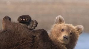 Great.Bear.Stakeout.S01.UNCUT.1080p.AMZN.WEB-DL.DD+2.0.x264-Cinefeel – 10.6 GB