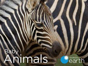 Baby.Animals.S02.720p.WEB.h264-CAFFEiNE – 3.5 GB
