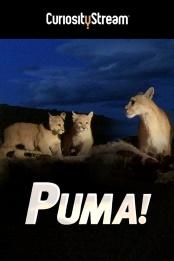Puma.2015.1080p.WEB-DL.AAC.2.0.H.264-WiLDCAT – 2.2 GB