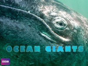 Chasing.Ocean.Giants.S01.1080p.DISC.WEB-DL.AAC2.0.x264-DRi – 15.7 GB