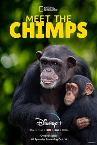 Meet.The.Chimps.S01.1080p.WEB-DL.DDP5.1.H.264-ROCCaT – 13.3 GB