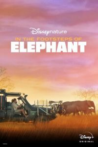 In.the.Footsteps.of.Elephant.2020.HDR.2160p.WEB.h265-KOGi – 9.5 GB