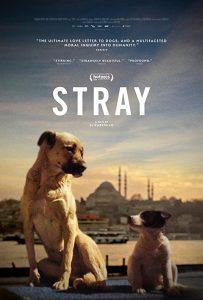 Stray.2020.720p.BluRay.DD5.1.x264-NTb – 4.1 GB