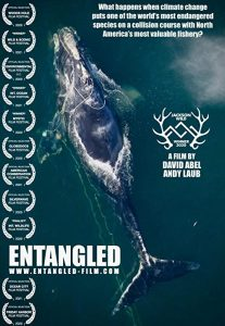 Entangled.The.Race.to.Save.Right.Whales.from.Extinction.2020.720p.AMZN.WEB-DL.DDP2.0.H.264-TEPES – 2.8 GB